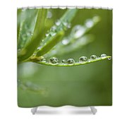 Water Droplets On Evergreen Shower Curtain