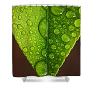 Water Droplets On Lemon Leaf Shower Curtain
