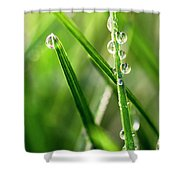 Water Drops On Spring Grass Shower Curtain
