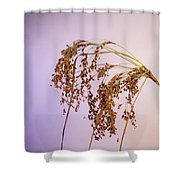 Drooping Teddy Bear Grass Shower Curtain