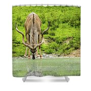 Water Hole Shower Curtain