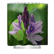 Water Hyacinth Shower Curtain