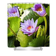 Water Lilies Shower Curtain by Ray Laskowitz - Printscapes