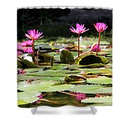 Water Lilies Tam Coc  Shower Curtain