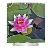 Water Lilly  And Lilly Pads Shower Curtain