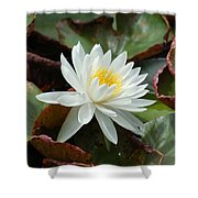 Water Lilly Closeup Shower Curtain