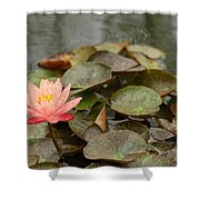 Water Lilly In Summer Shower Curtain
