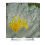 Water Lilly Morph Shower Curtain