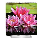 Water Lilly Triplets Shower Curtain