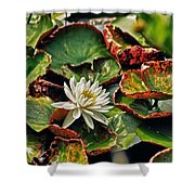 Water Lilly With Brown Pads Shower Curtain