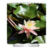 Water Lilly With Dragonfly Shower Curtain
