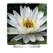Water Lily 1 Shower Curtain