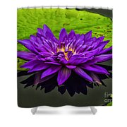Water Lily 15-2 Shower Curtain