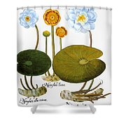 Water Lily, 1613 Shower Curtain