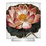 Water Lily, 1806 Shower Curtain
