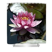 Water Lily 2 Shower Curtain