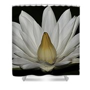 Water Lily 23 Shower Curtain