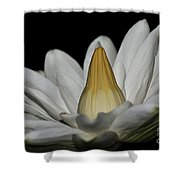 water lily 25 White Night Blooming Water Lily I Shower Curtain