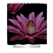 water lily 27 Dark Pink Night Blooming Water Lily Shower Curtain