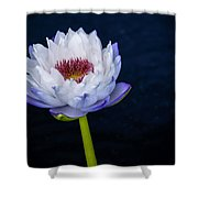 Water Lily #3 Shower Curtain