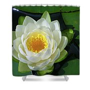 Water Lily 3437 Shower Curtain