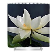 Water Lily 36 Shower Curtain