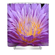 water lily 55 Ultraviolet Shower Curtain