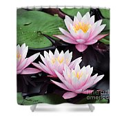 water lily 91 Sunny Pink Water Lily Shower Curtain