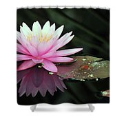 water lily 92 Sunny Pink Water Lily with Lily Pad Shower Curtain