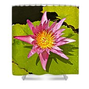 Water Lily After Rain 3 Shower Curtain