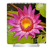 Water Lily After Rain 4 Shower Curtain