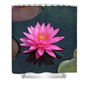 Water Lily - Afternoon Delight Shower Curtain