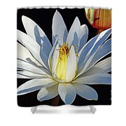 Water Lily At Dusk Shower Curtain