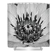 Water Lily B/w Shower Curtain