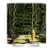Water Lily Budd Shower Curtain