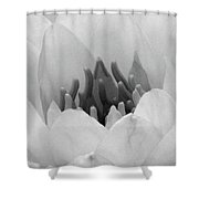 Water Lily - Burnin' Love 05 - Bw - Water Paper Shower Curtain