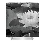 Water Lily - Burnin' Love 13 - Bw Shower Curtain