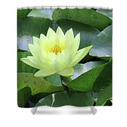 Water Lily - Burnin' Love 14 Shower Curtain