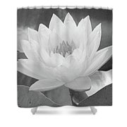 Water Lily - Burnin' Love 15 - Bw - Water Paper Shower Curtain