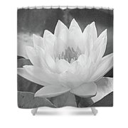 Water Lily - Burnin' Love 16 - Bw - Water Paper Shower Curtain