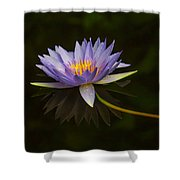 Water Lily Close Up Shower Curtain