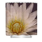 Water Lily Digital Painting Shower Curtain