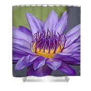 Water Lily Director George T Moore Shower Curtain