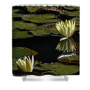 Water Lily Shower Curtain by Fabio Giannini