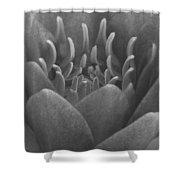 Water Lily Flame Bw Shower Curtain