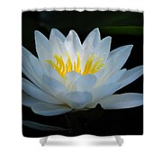 Water Lily Glow Shower Curtain