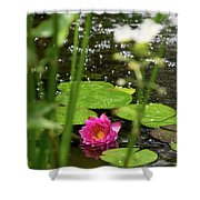 Water Lily In A Pond Shower Curtain