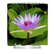 Water Lily In A Tropical Garden_4657 Shower Curtain