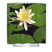 Water Lily I V Shower Curtain