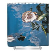 Water Lily Leaves And Reflection Of Clouds In Unknown Lake Shower Curtain